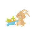 cute rabbit with blue wheelbarrow full of carrot vector image vector image