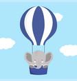elephant on air balloon vector image vector image