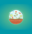 growing plant flower growth vector image