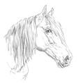 horse portrait-6 vector image vector image