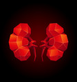 red low poly human kidneys on a black background vector image vector image