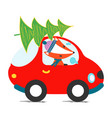 car driving christmas tree vector image