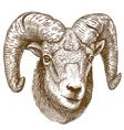 engraving ram head vector image vector image