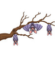 happy cartoon bat hanging on tree vector image vector image