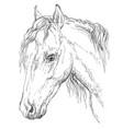 horse portrait-8 vector image vector image