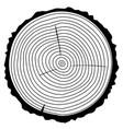 wood rings vector image