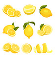 detailed set of sliced and whole lemons vector image