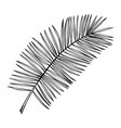 hand drawn date palm leaves sketches set exotic vector image vector image