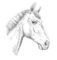 horse portrait-10 vector image vector image