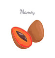 mamey exotic juicy fruit whole and cut icon vector image