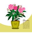 oleander plant in pot banner vector image vector image