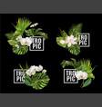 tropic plants banner set vector image vector image