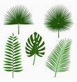 tropical palm leaves jungle leaf set vector image