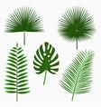 tropical palm leaves jungle leaf set vector image vector image