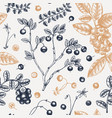 wild berries seamless pattern in engraved style vector image
