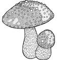 fly agaric amanita poison mushroom ink drawing vector image