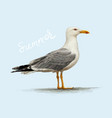 seagull detailed vector image vector image
