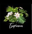tropicana plants compostion vector image