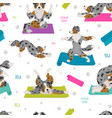 yoga dogs poses and exercises australian shepherd vector image vector image
