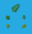 flat icon ecology set of forest acacia leaf vector image vector image