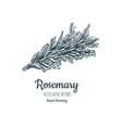 rosemary sketch style vector image vector image