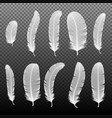 set of various white bird feathers on a black vector image