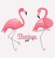 set two pink flamingos vector image