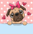 cute cartoon pug dog girl is holding a placard on vector image vector image