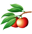 Fresg nectarine on the branch vector image vector image