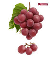 grapes fresh fruit 3d realistic vector image vector image