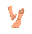 human feet on a white vector image vector image