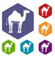camel icons set hexagon vector image vector image