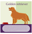 golden retriever colourful postcard vector image