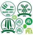 Pea vector image