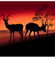 Two Antelopes vector image