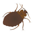 bed bug vector image vector image