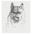 dog portrait hand drawing t-shit emblem pet vector image