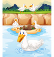 five ducks at pond vector image