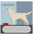 labrador colourful postcard vector image vector image