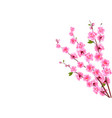 sakura decorative flowers of cherry with buds on vector image vector image