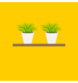 Grass in flower pot on shelf Growing Icon set vector image