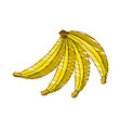 drawing banana fruit food vector image vector image
