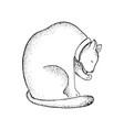 fat cat in collar line art vector image