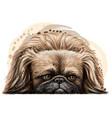 pekingese dog wall sticker vector image vector image