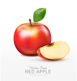 ruddy apple with apple slices isolated vector image vector image