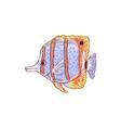 tropical sea butterfly fish and beak coralfish vector image vector image