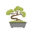 Bonsai japanese tree vector image vector image