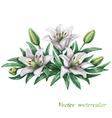 Lilies watercolor vector image vector image
