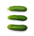 realistic three fresh cucumbers set isolated on vector image