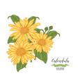 calendula flowers and leaves floral composition vector image vector image